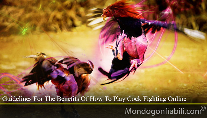 Guidelines For The Benefits Of How To Play Cock Fighting Online