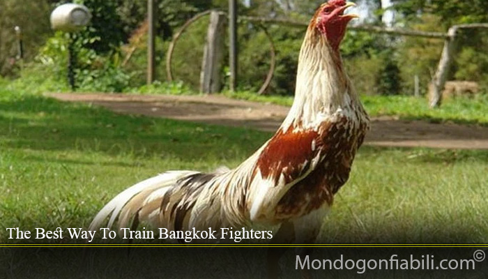 The Best Way To Train Bangkok Fighters